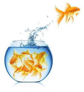 התאמה בין סוגי דגים
